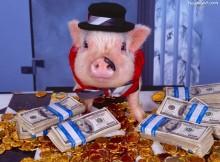 Świnia z pieniędzmi